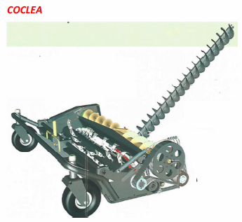 coclea-1.png